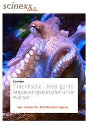 Tintenfische - Intelligente Anpassungskünstler unter Wasser