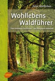 Wohllebens Waldführer - Tiere und Pflanzen bestimmen – das Ökosystem entdecken
