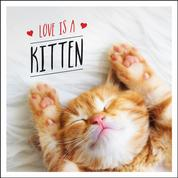Love is a Kitten - A Cat-Tastic Celebration of the World's Cutest Kittens