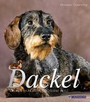 Dackel - Kleiner Hund mit großem Herz