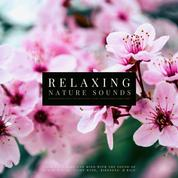 Ultimate Relaxing Nature Sounds with Relaxing Music for Meditation, Study, Mindfulness & Deep Sleep - Calm Your Body and Mind with Sound of Ocean Waves, Light Wind, Birdsong & Rain