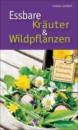 Essbare Kräuter und Wildpflanzen - erkennen, sammeln und zubereiten