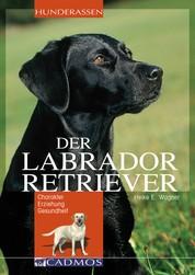Labrador Retriever - Charakter, Erziehung, Gesundheit