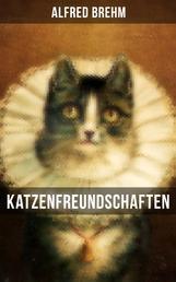 Katzenfreundschaften - Die beliebtesten Katzengeschichten