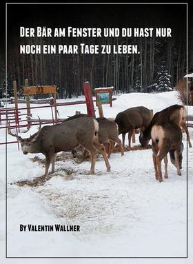 DER BÄR AM FENSTER UND DU HAST NUR NOCH EIN PAAR TAGE ZU LEBEN
