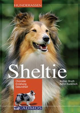 Sheltie