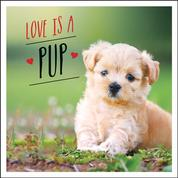 Love is a Pup - A Dog-Tastic Celebration of the World's Cutest Puppies