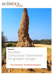 Termiten - Lichtscheue Teamworker mit großem Hunger