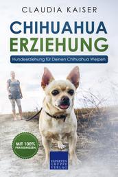 Chihuahua Erziehung - Hundeerziehung für Deinen Chihuahua Welpen