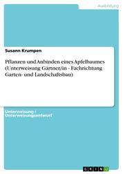 Pflanzen und Anbinden eines Apfelbaumes (Unterweisung Gärtner/in - Fachrichtung Garten- und Landschaftsbau)