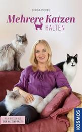 Mehrere Katzen halten - Mein Wissen aus der Katzenpraxis