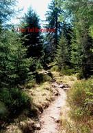 Martin Welsch: Das Tal Irminsul