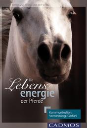 Die Lebensenergie der Pferde - Kommunikation, Verbindung, Gefühl