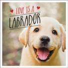 Charlie Ellis: Love is a Labrador