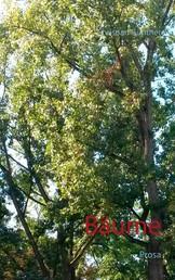 Bäume - Prosa