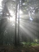 Cornelia Ertmer: Und sag nicht, dass die Sonne scheint ★★★