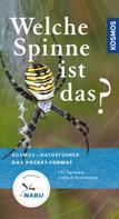 Martin Baehr: Welche Spinne ist das?