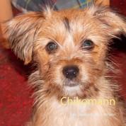 Chikomann - Das Tagebuch eines Welpen