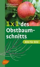 1 x 1 des Obstbaumschnitts - Bild für Bild