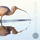 David Rennie: Art in Nature