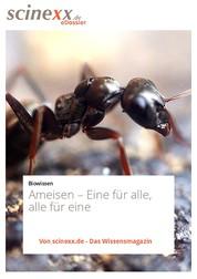 Ameisen - Eine für alle, alle für eine