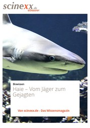 Haie - Vom Jäger zum Gejagten